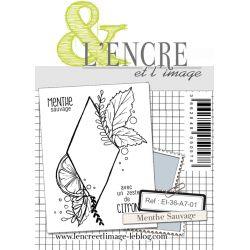 Tampon clear - Menthe Sauvage - L'Encre et l'Image